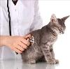 Ветеринарные клиники в Колывани